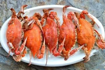 螃蟹和鱼能感到疼痛吗我们是否应赋予其更人道的待遇